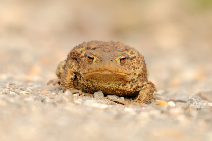Toad © Amy Lewis