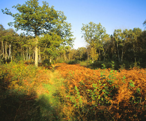 Blackmoor Copse (C) Steve Day