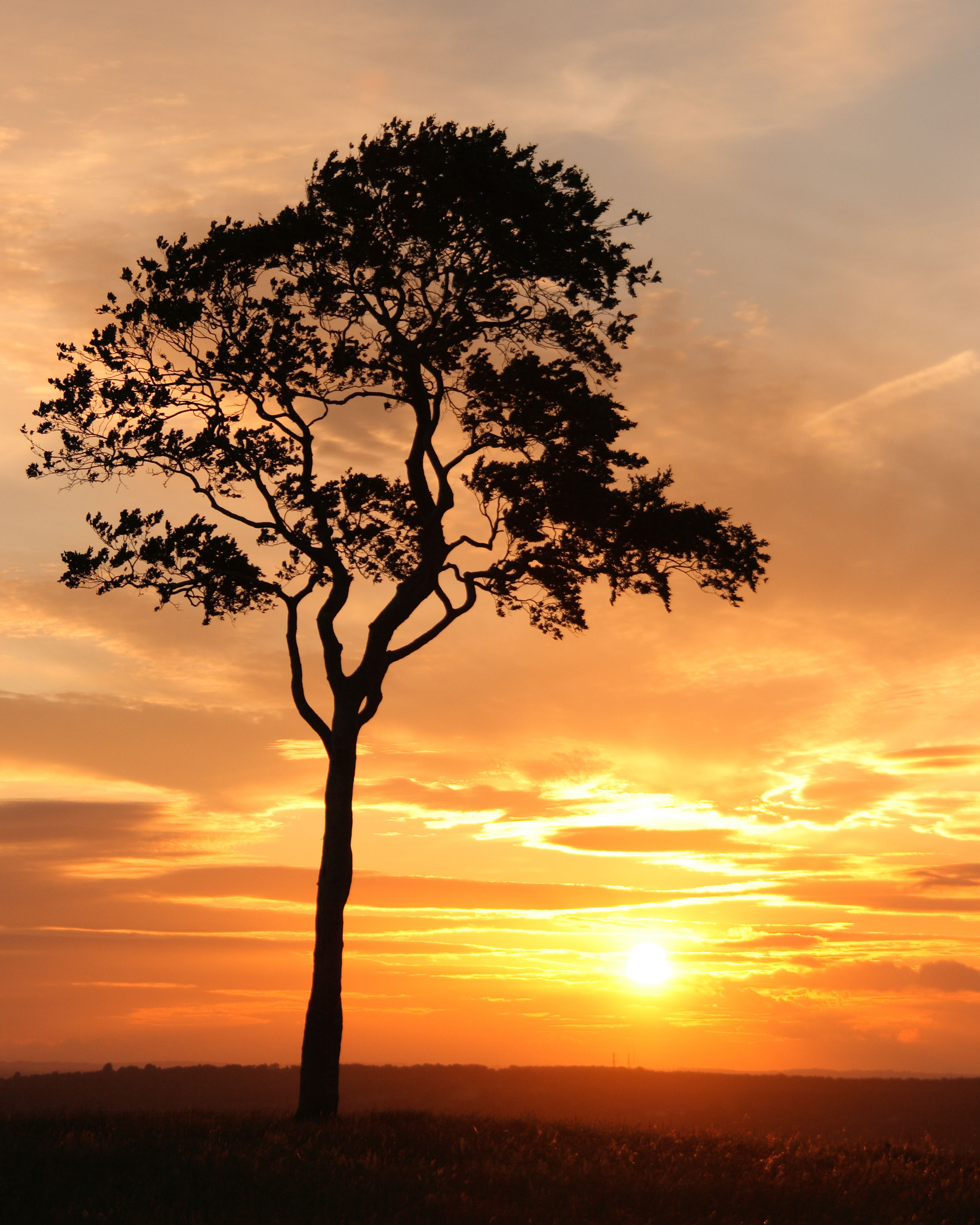 Tree At Sunset © Geraint Owen 26Apr2012