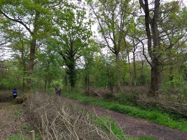 Milestone Project coppicing at Green Lane wood and Biss wood