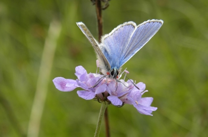 Common blue © Sarah Marshall