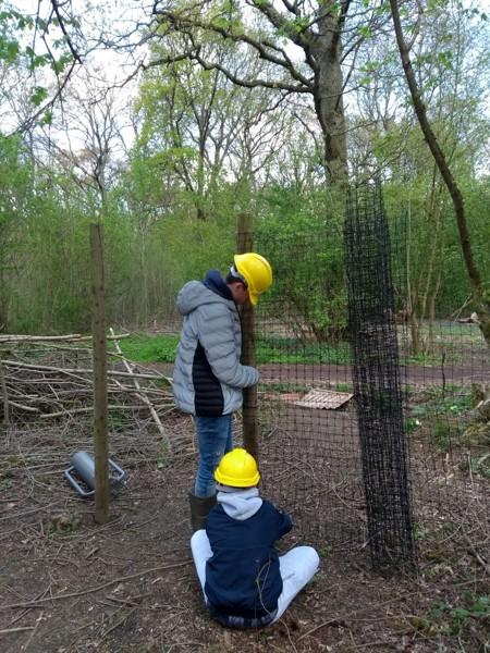 Milestone Project putting up deer fencing at Green Lane wood and Biss wood