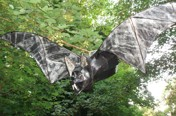 Wooden bat © Jane Brown
