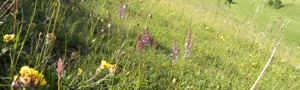 Orchids at Dunscombe Bottom © Sarah Marshall