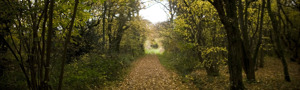 Green Lane Wood © Owain Shaw