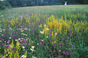 Wiltshire Wildlife and UK Rewilding