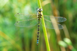 Dragonfly Walk at Lower Moor Farm