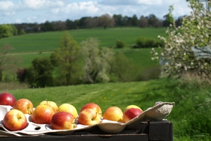 Orchard Pruning and Maintenance