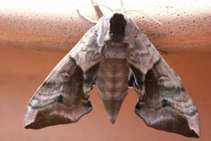 National Moth Night at Morningside Farm