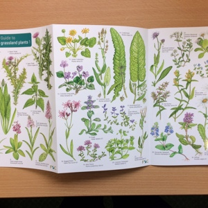 Grassland plants ID guide