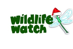 Langford Lakes Wildlife Watch Group Christmas Meeting
