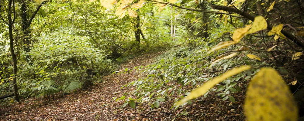 Peppercombe Wood © Owain Shaw