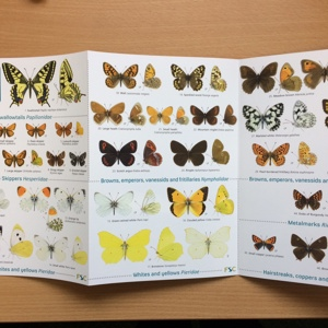 Butterflies ID guide