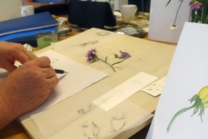 Botanical Illustrations Workshop