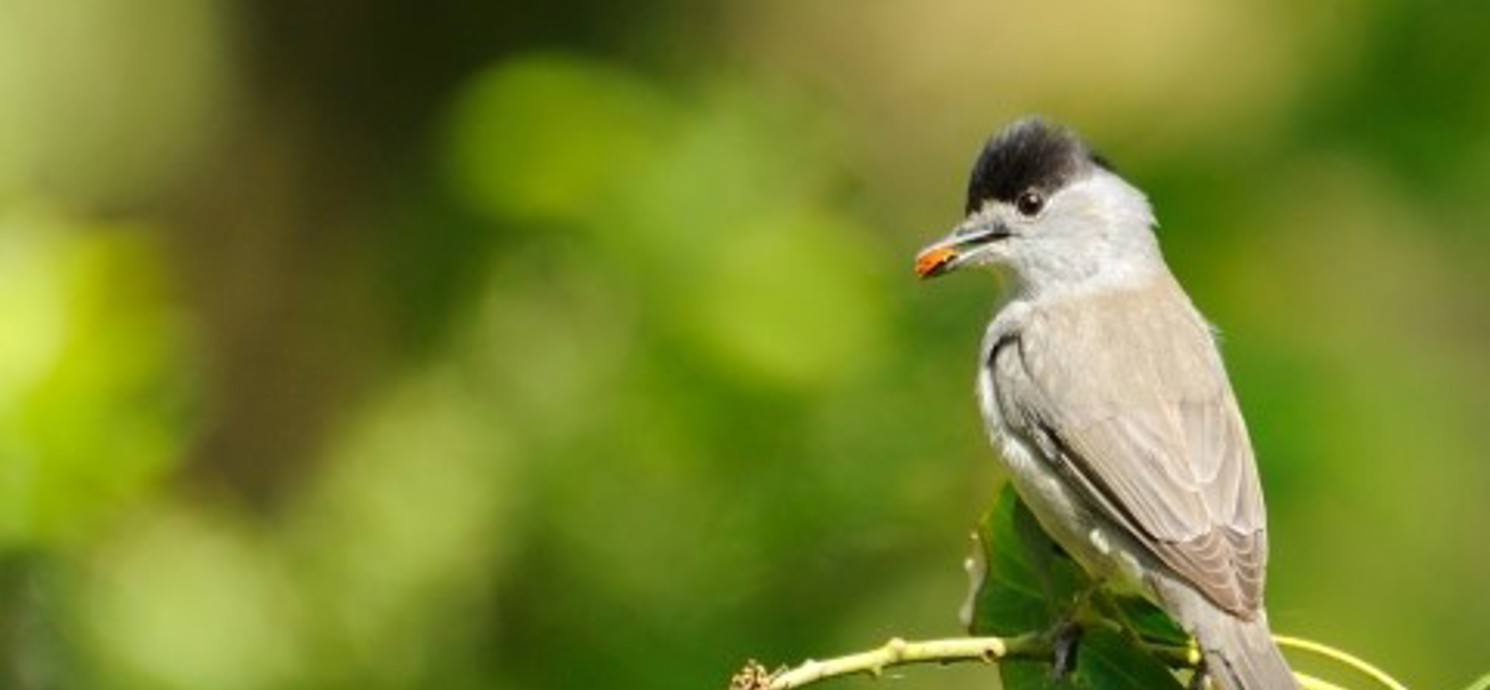 Birds to see at Coombe Bissett Down