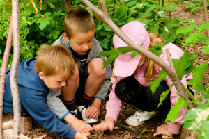 Level 3 Certificate in Forest School Programme Support (QCF)