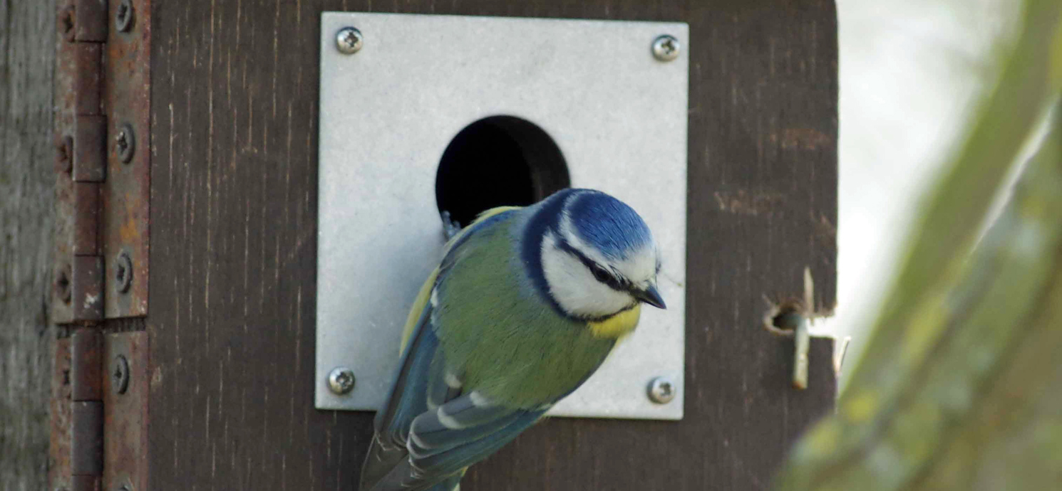 Nest Box Instructions and Template