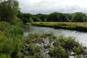 River Guardians - Elizabeth Hall, Tisbury