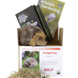 Hedgehog Gift Box