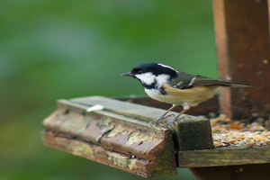 Build your own bird table