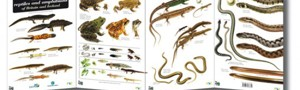 Reptiles and Amphibians ID guide